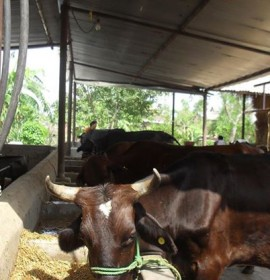 Nandini Advanced Animal Husbandry Farms