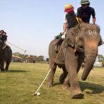 अन्तर्राष्ट्रिय हात्तीपोलो' चितवनमा फेरि सुरु हुँदै