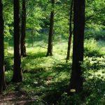 जन प्रतिनिधिहरुसंग वन नीतिका वारेमा छलफल