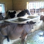 Nandini Advanced Animal Husbandry Farms