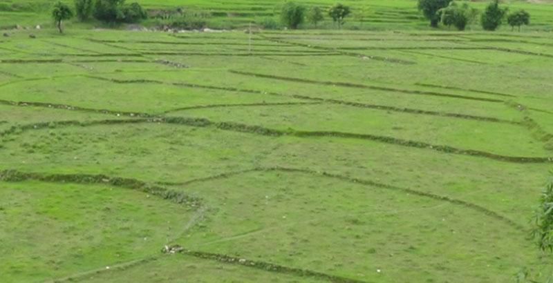 दाङमा ५७ हजार हेक्टर जमीन सिञ्चित गरिँदै