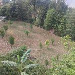 वडा कार्यालय बनाउन दुई रोपनी जग्गा दान