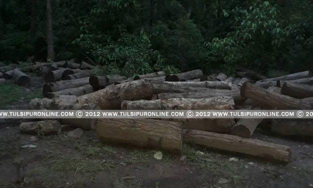 सामुदायिक वन क्षेत्रबाटै सालको गोलीया चोरी