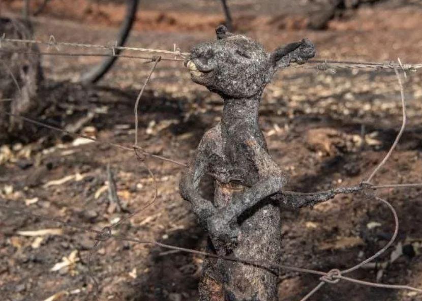 अस्ट्रेलियाको आगलागीबाट  झण्डै ५० करोड जनावर जले