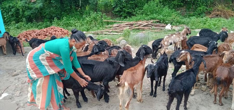पचास जना महिलाहरुलाई बाख्रा वितरण
